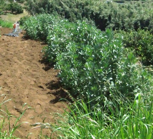 豆の大収穫祭....._b0137932_10141818.jpg