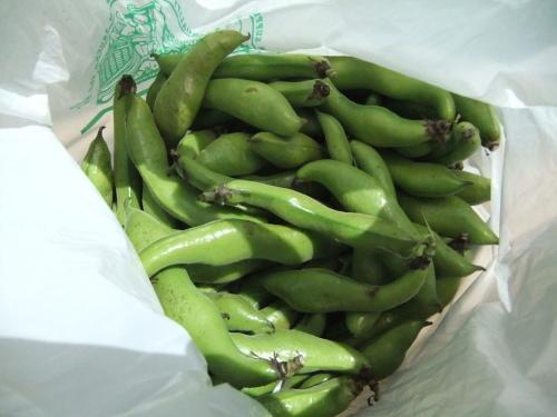 豆の大収穫祭....._b0137932_10154135.jpg