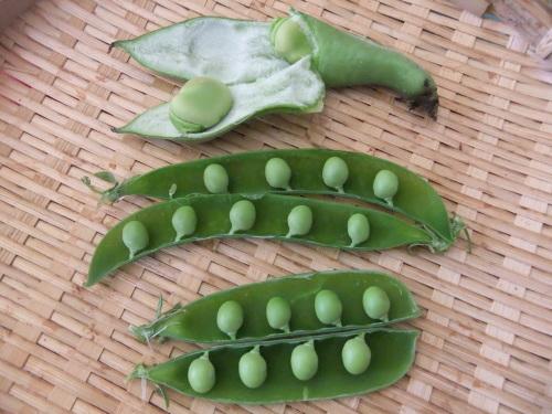 豆の大収穫祭....._b0137932_10160924.jpg
