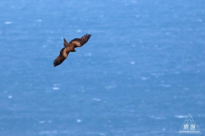 706 美保関 ~春の小鳥と繁殖期のキジ~_c0211532_15441953.jpg