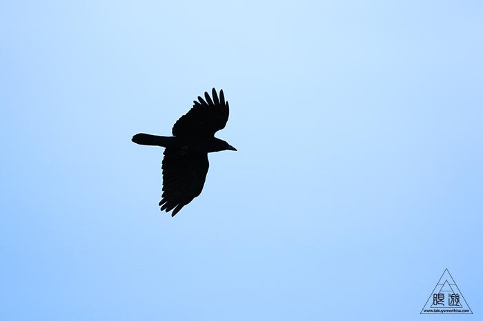706 美保関 ~春の小鳥と繁殖期のキジ~_c0211532_15441971.jpg