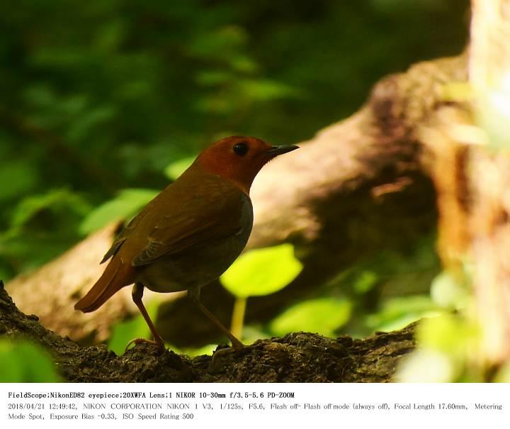 秋ヶ瀬公園・ピクニックの森 2018.4.21_c0062451_1941450.jpg