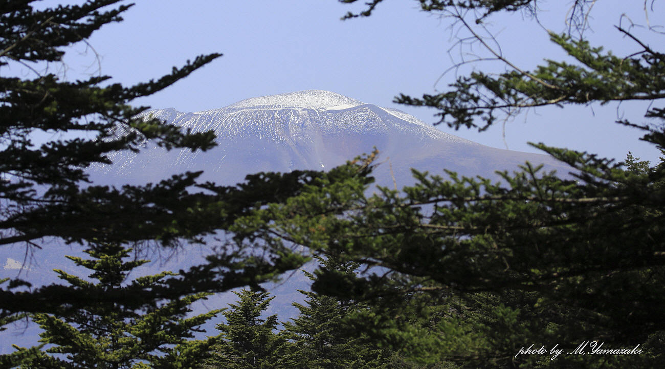 浅間山とキビタキ_c0217255_15114151.jpg