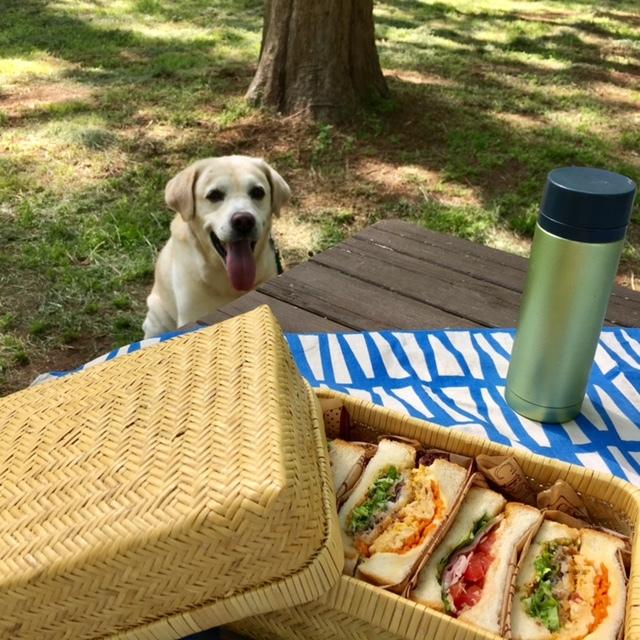 picnic メタセコイアの森の中で♪_a0165160_13224762.jpg
