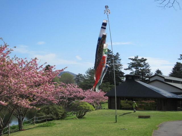 4月30日の桜と新緑*軽井沢の桜もいよいよ見納めです。_f0236260_09481568.jpg