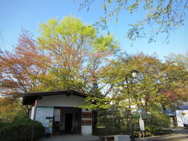 4月30日の桜と新緑*軽井沢の桜もいよいよ見納めです。_f0236260_11123310.jpg