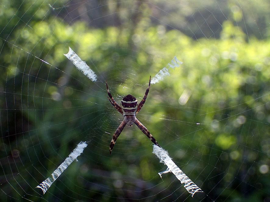 マルコ(湿地)のクモ_f0131669_21531421.jpg