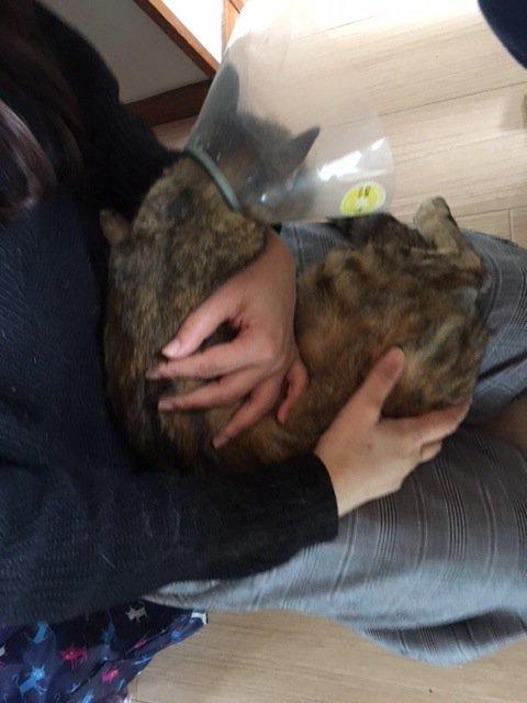 保護猫いっちゃん、無事に不妊手術、目の縫合手術、済みましたが。。_d0179994_22250455.jpg