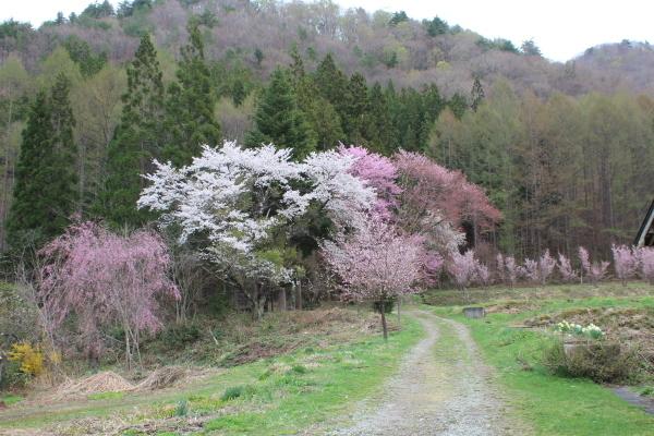 南会津は春爛漫_f0227395_15391933.jpg