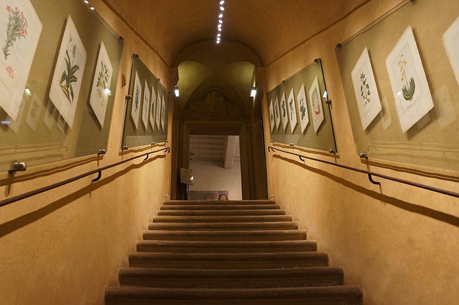 ハーブ博物館〜サンセポルクロ_f0106597_06270377.jpg
