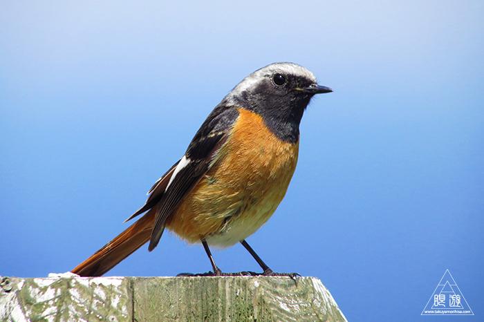 575 美保関 ~春の小鳥たち~_c0211532_09372523.jpg