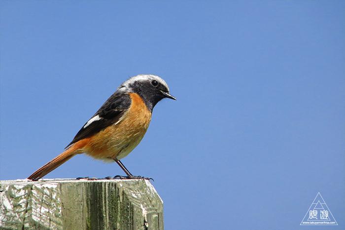 575 美保関 ~春の小鳥たち~_c0211532_10411429.jpg