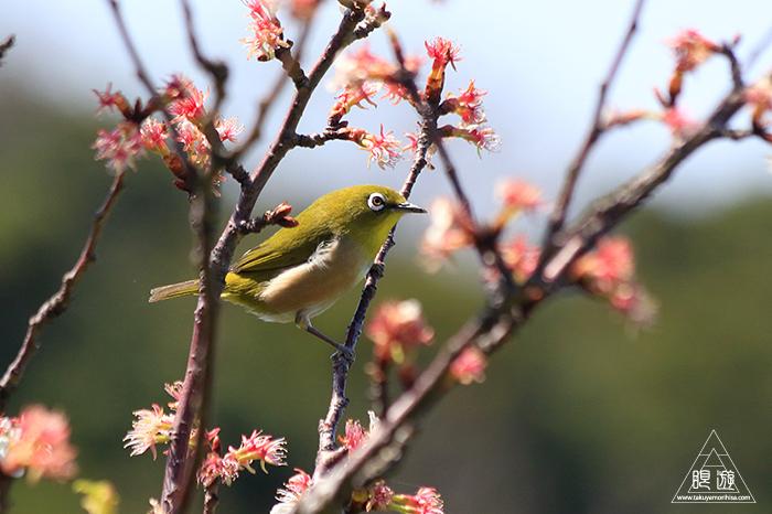 575 美保関 ~春の小鳥たち~_c0211532_10540361.jpg