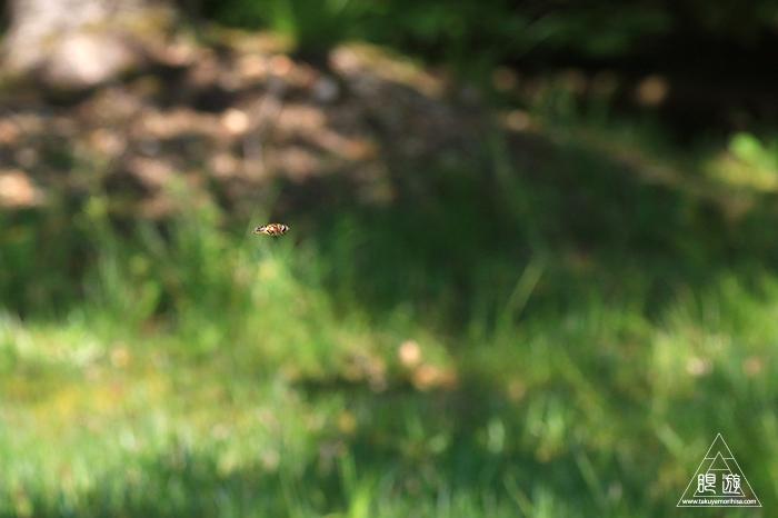 577 松江フォーゲルパーク ~森で虫撮影~_c0211532_15352349.jpg