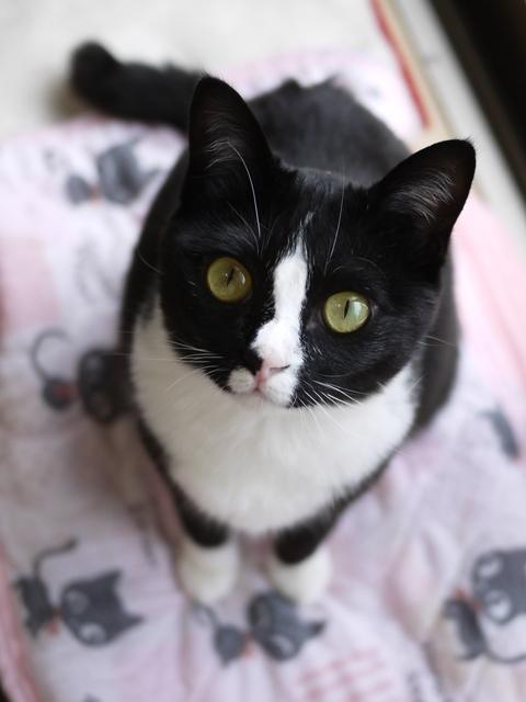猫のお留守番 ふぅちゃん編。_a0143140_22231415.jpg