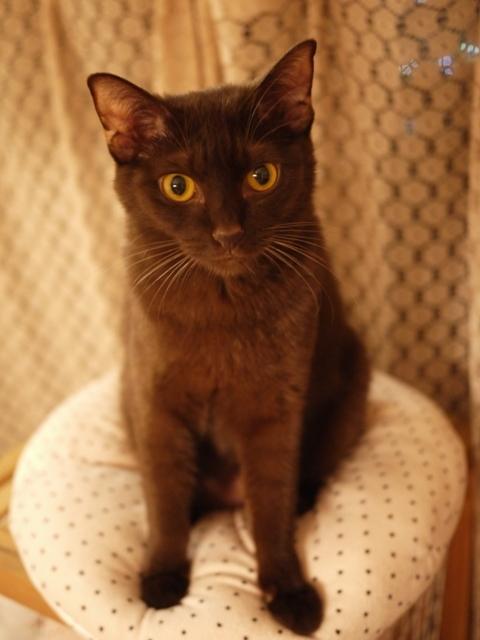はじめてのお誕生日猫 あんしゃぁりぃ1歳編。_a0143140_23351501.jpg