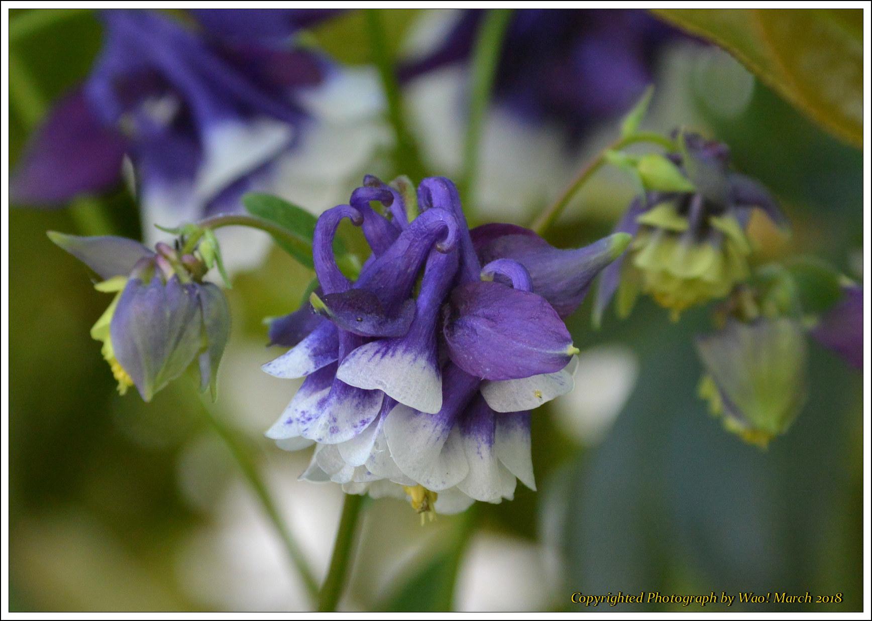 庭に咲く花 -1_c0198669_17401755.jpg
