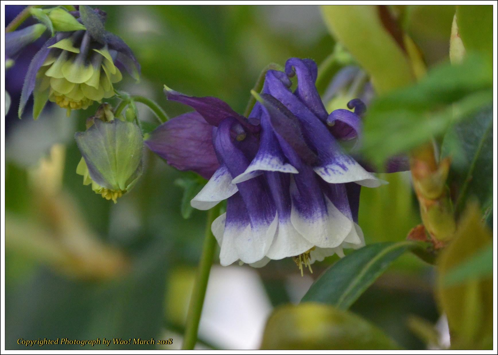 庭に咲く花 -1_c0198669_17402310.jpg