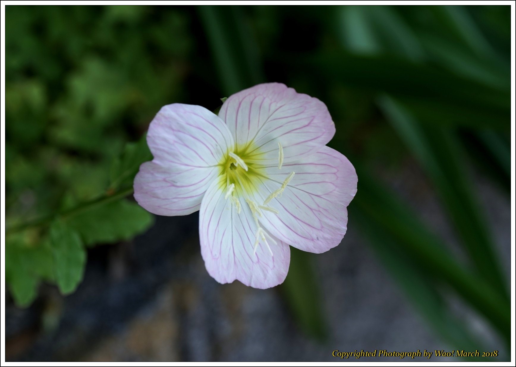 庭に咲く花 -1_c0198669_17404920.jpg