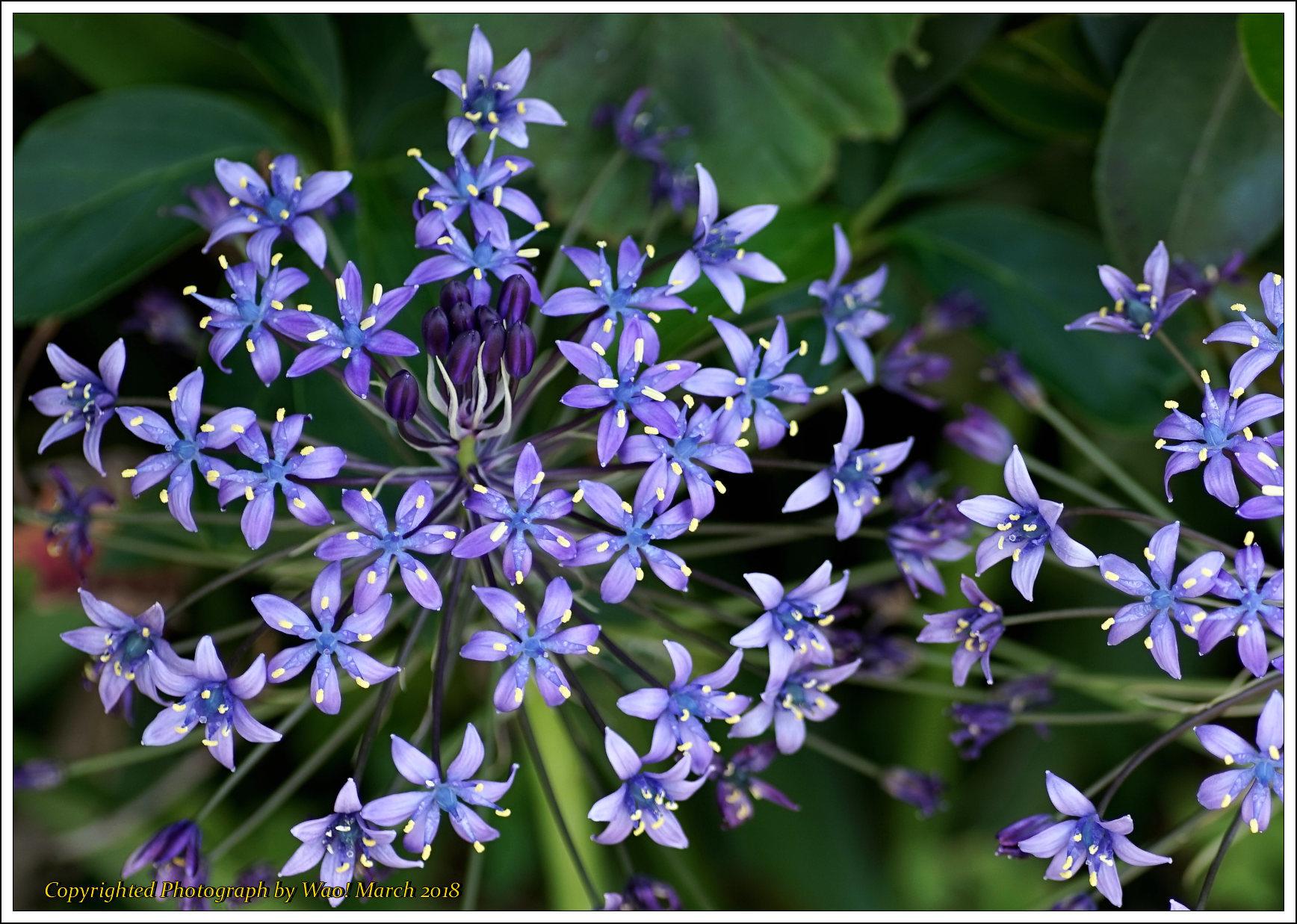 庭に咲く花 -1_c0198669_17412749.jpg