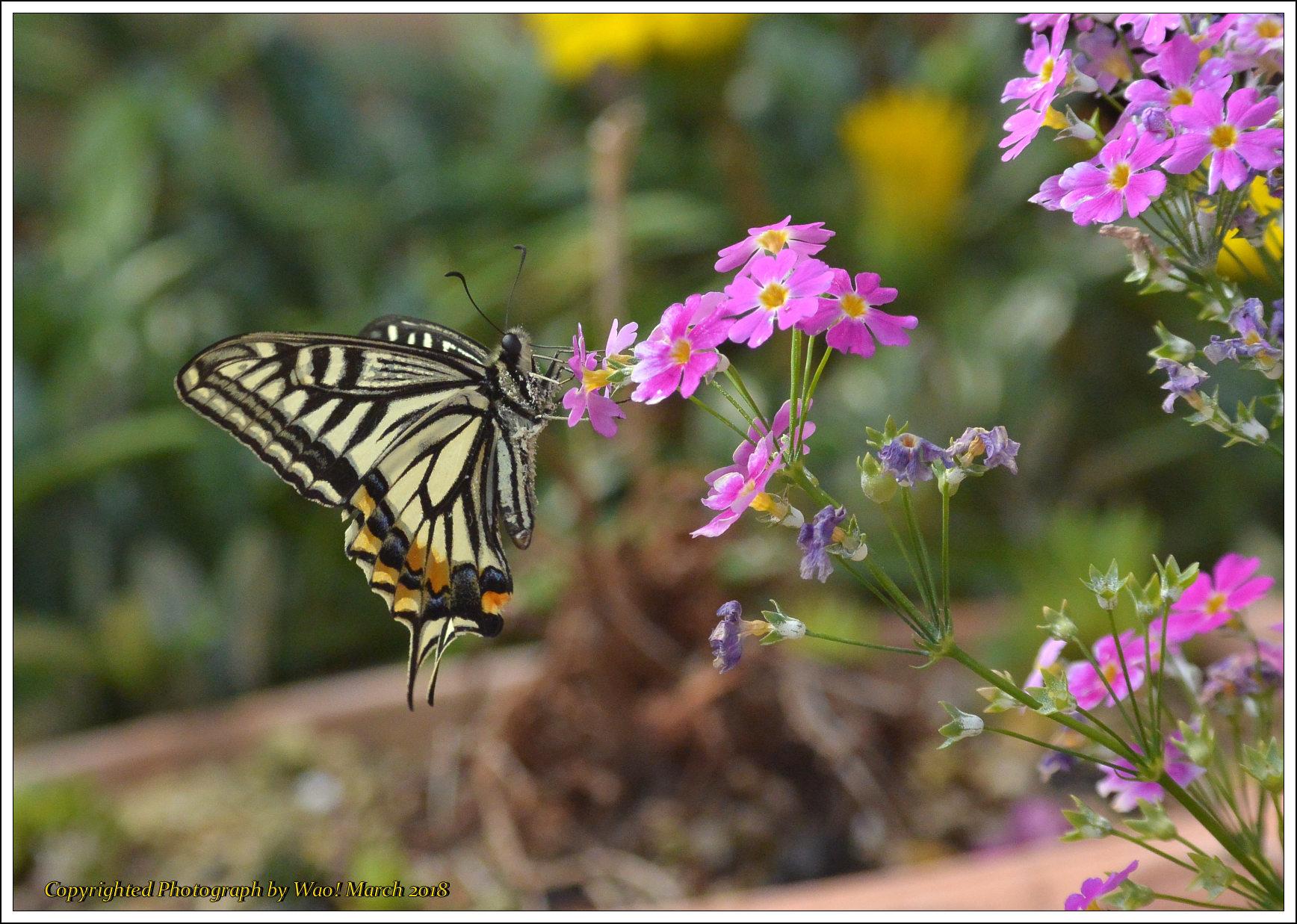 庭に咲く花 -1_c0198669_17415929.jpg