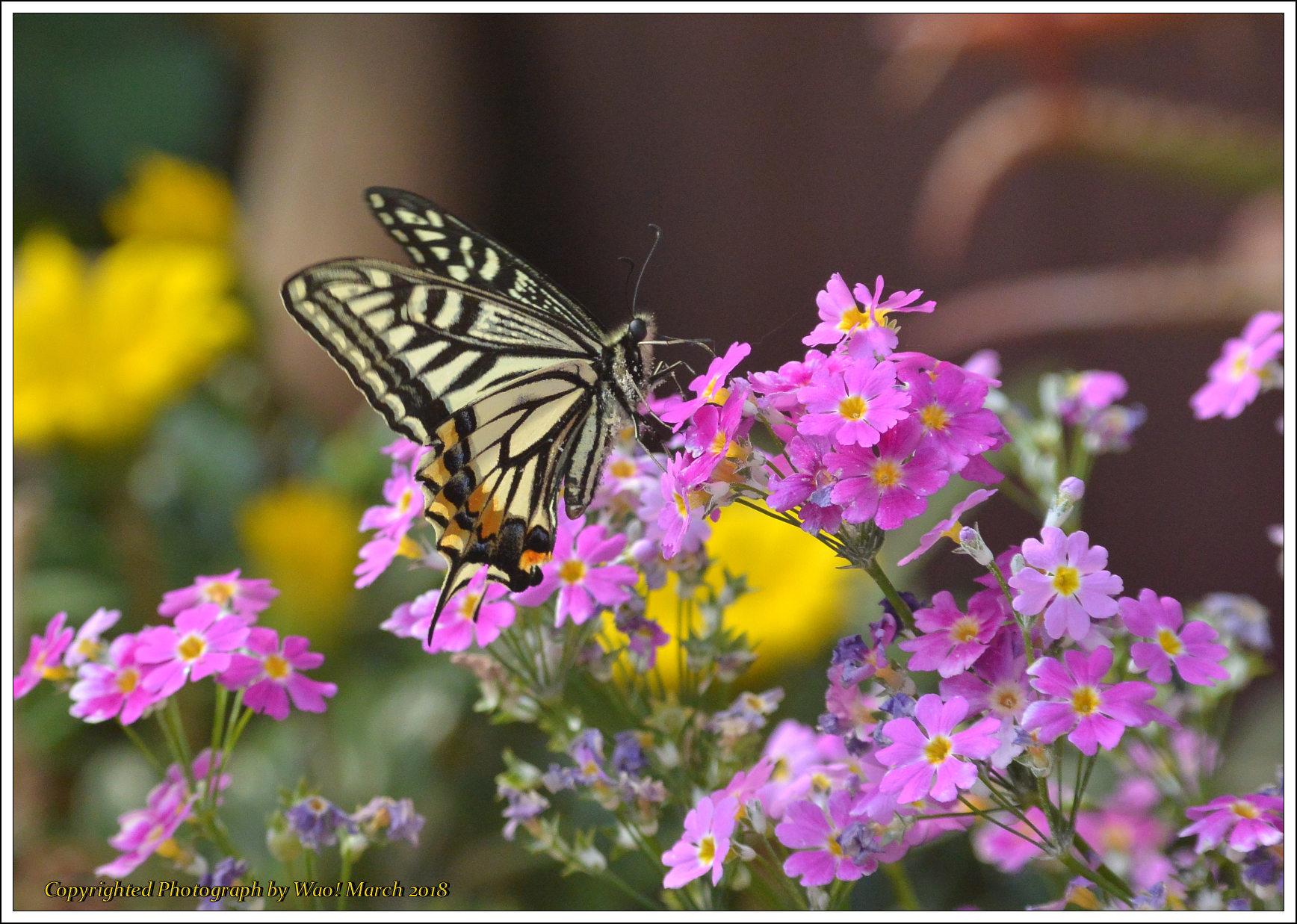 庭に咲く花 -1_c0198669_17421348.jpg