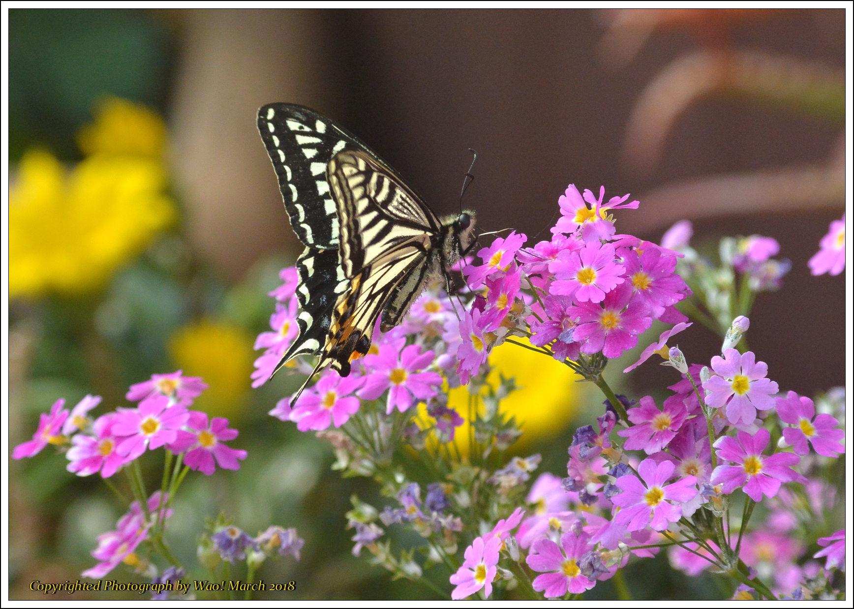 庭に咲く花 -1_c0198669_17422261.jpg