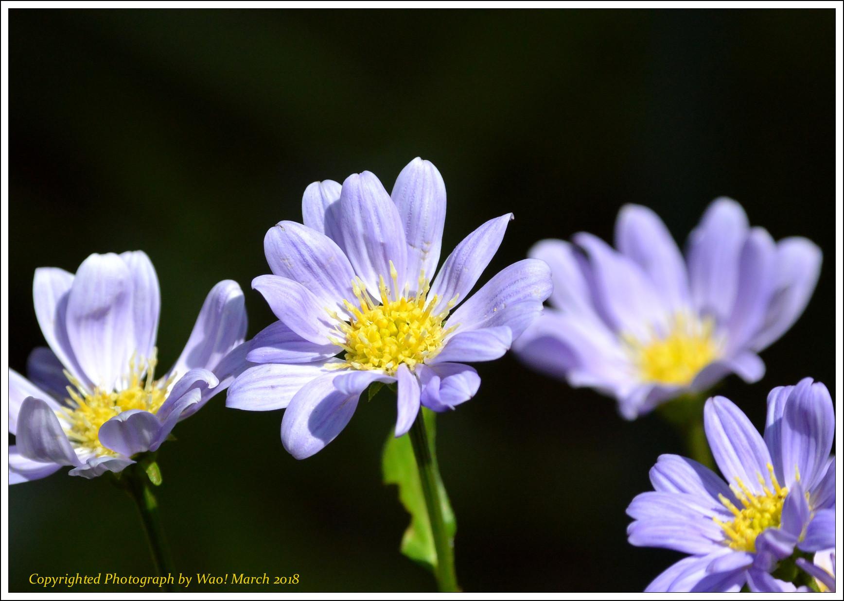 庭に咲く花 -1_c0198669_17440635.jpg