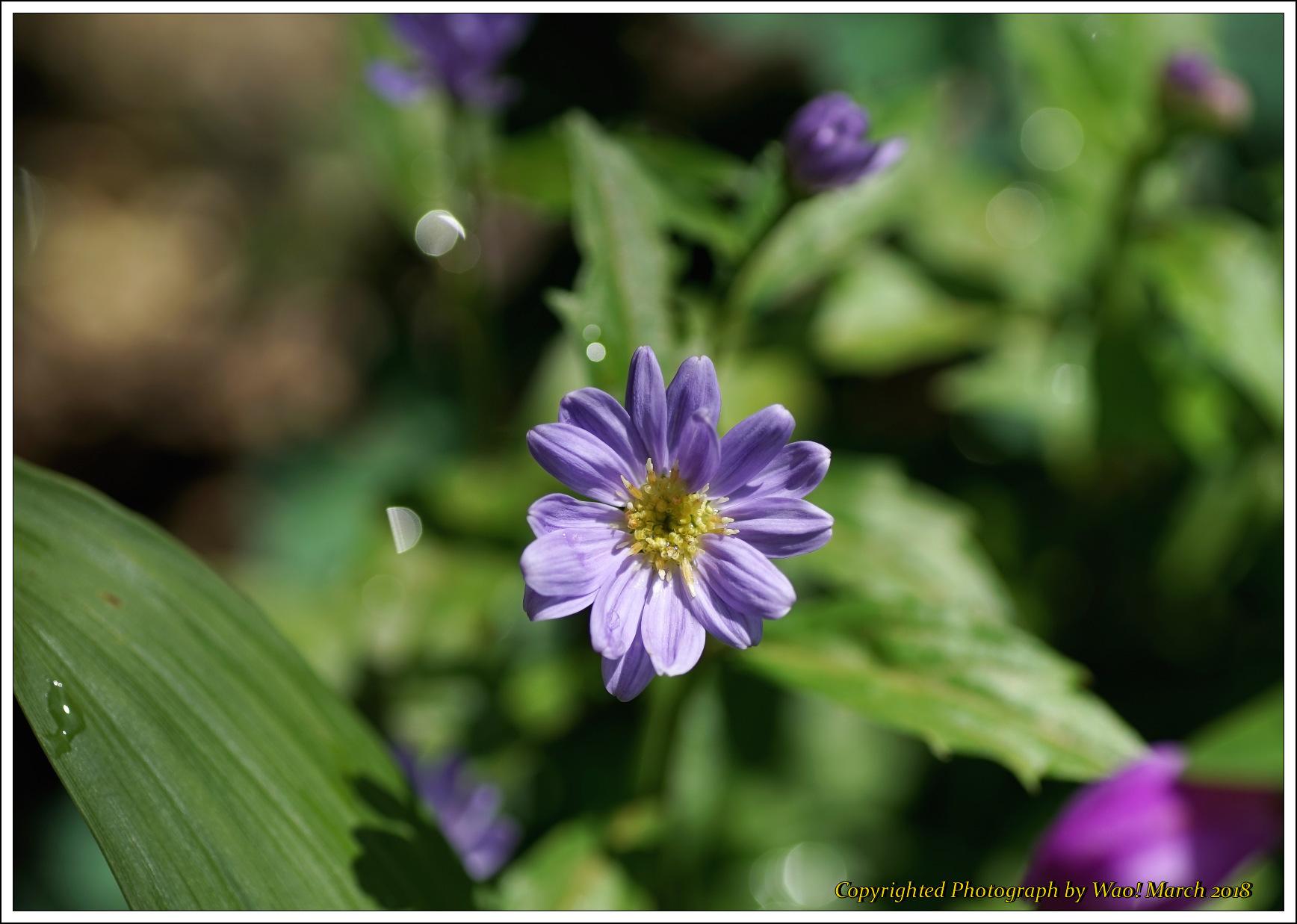 庭に咲く花 -1_c0198669_17442269.jpg
