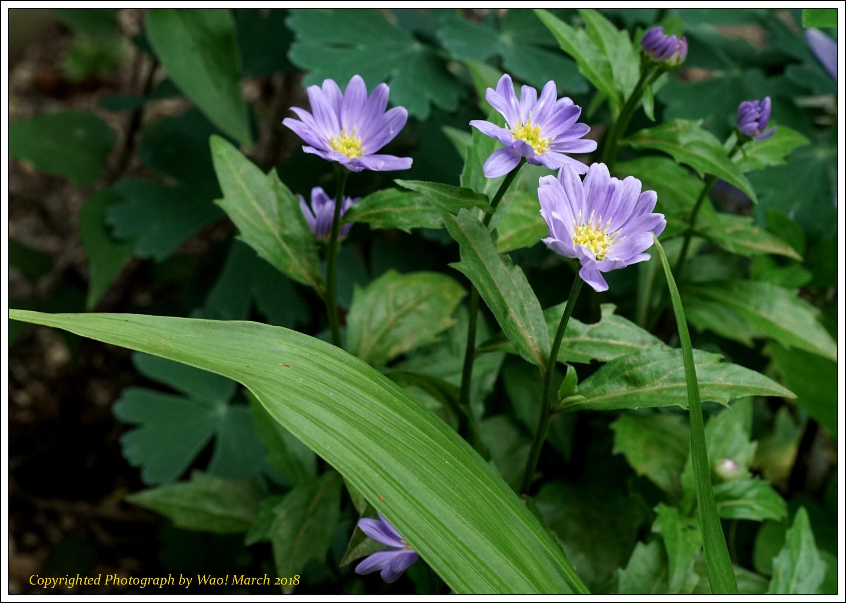 庭に咲く花 -1_c0198669_17443210.jpg