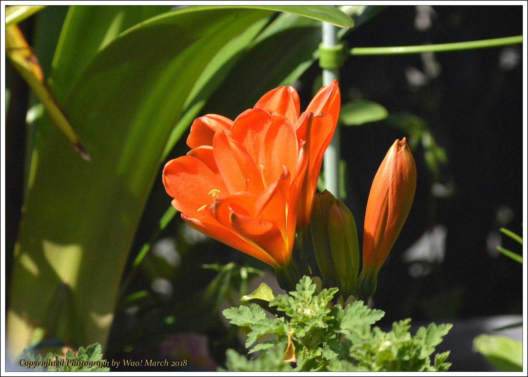 庭に咲く花 -1_c0198669_17450575.jpg