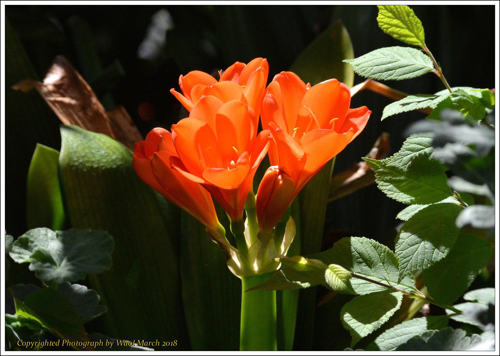 庭に咲く花 -1_c0198669_17452512.jpg
