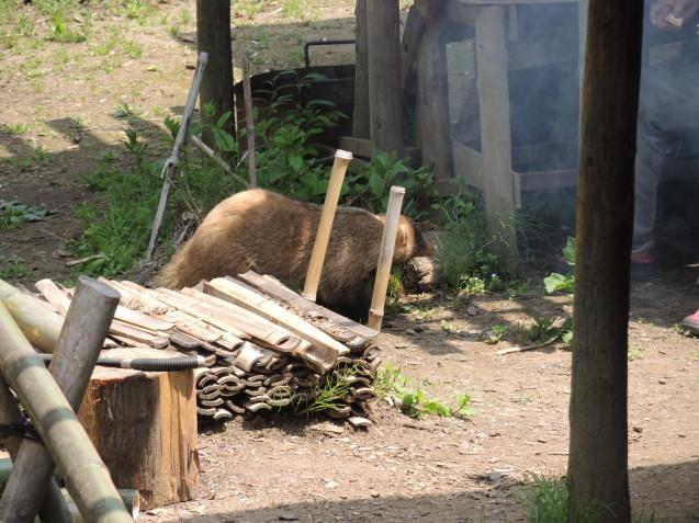 鐘撞堂山でムジナを見ました!_e0232277_15503193.jpg