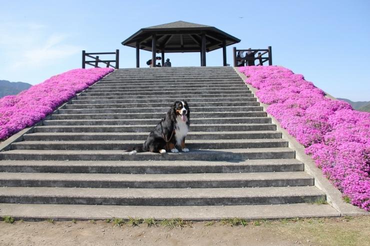 4月・お散歩♪_b0135889_01243626.jpg