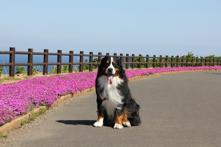 4月・お散歩♪_b0135889_01252331.jpg