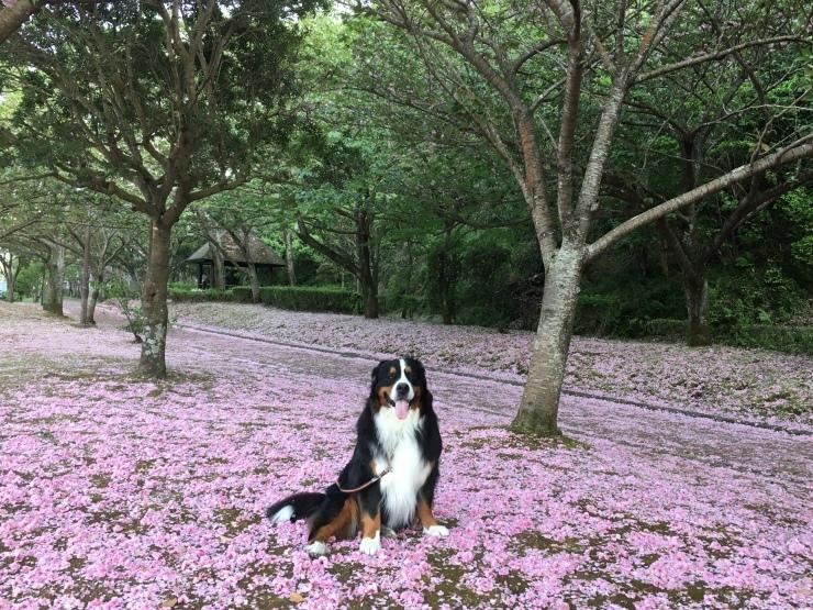 4月・お散歩♪_b0135889_01270301.jpg