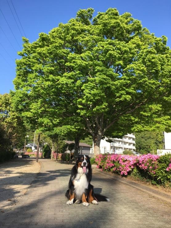 4月・お散歩♪_b0135889_01275915.jpg