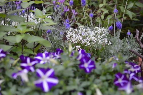 5月の庭_b0105897_17231380.jpg
