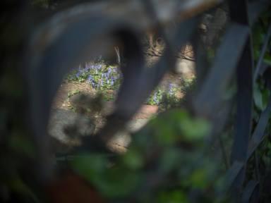 Jardin éternel ~永遠の庭 ~オールドレンズの眼差し_c0203401_10104083.jpg