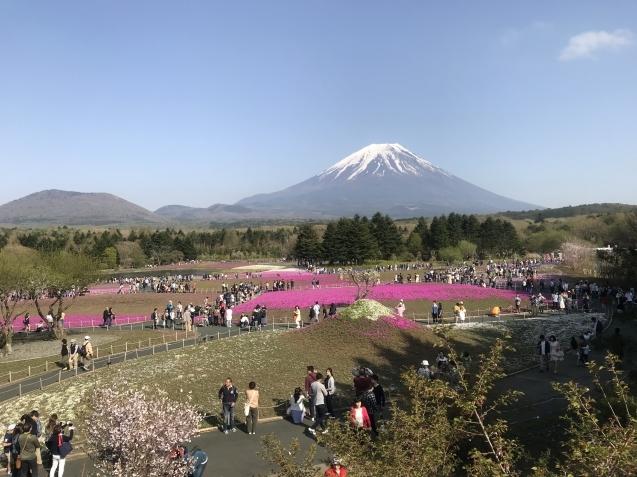 TOKIO山口問題は、Wag the Dog(ワグ・ザ・ドッグ)?そして、芝桜とチューリップ_d0054704_16104189.jpg