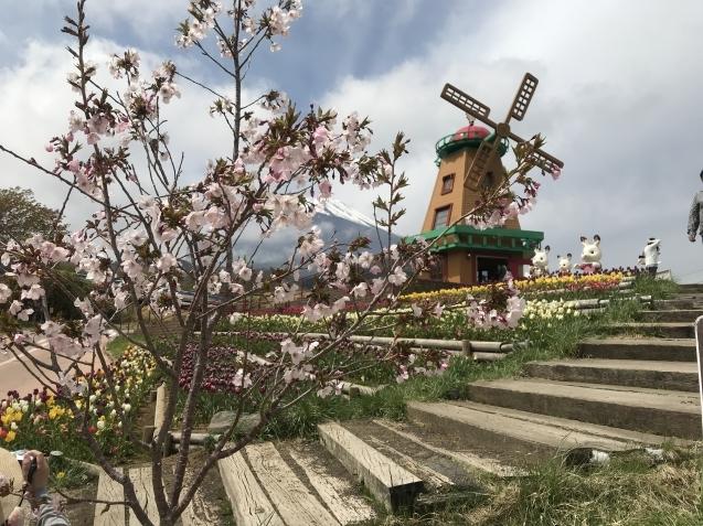 TOKIO山口問題は、Wag the Dog(ワグ・ザ・ドッグ)?そして、芝桜とチューリップ_d0054704_16152918.jpg