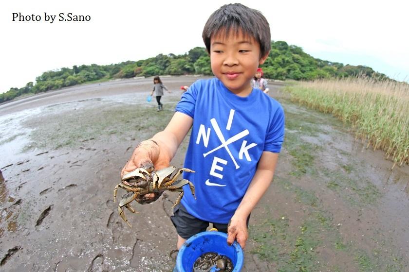 干潟のカニ観察会(2018年5月)_b0348205_22442211.jpg