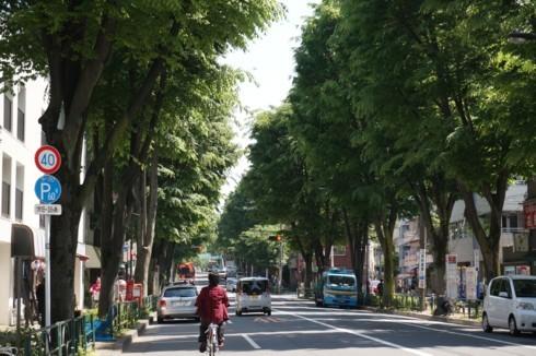 ケヤキ並木に葉が茂り_f0055131_20422682.jpg