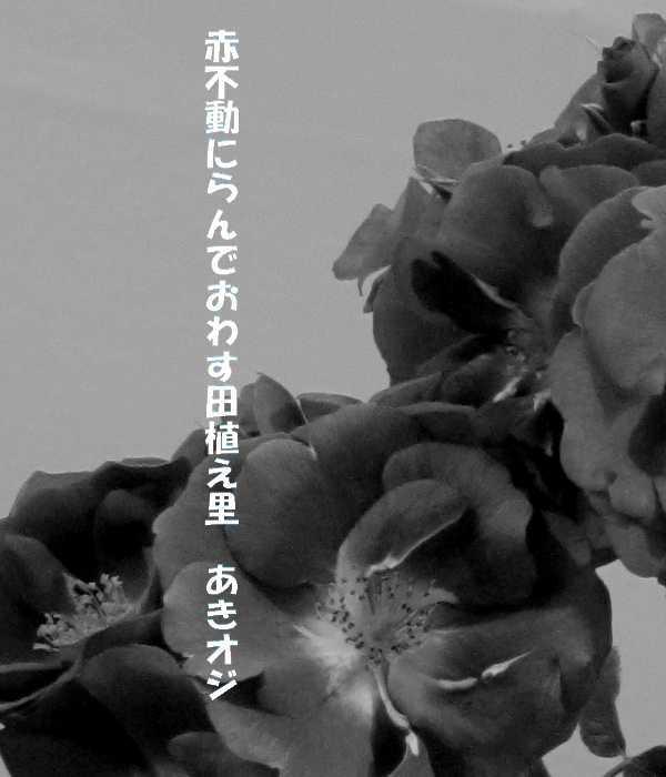 f0117041_05513219.jpg