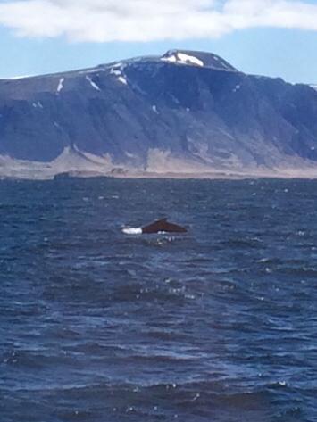 アイスランド⑤ホエールウオッチング_f0362457_21415834.jpg