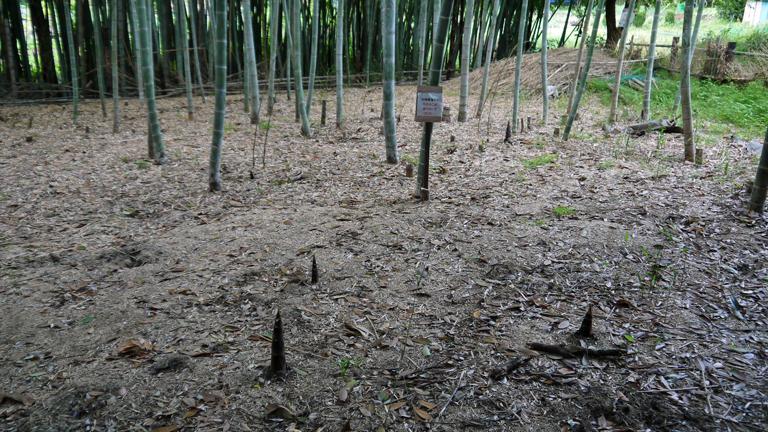 神奈川県所有の竹林に「筍掘らないで」の掲示板4・27_c0014967_18502611.jpg