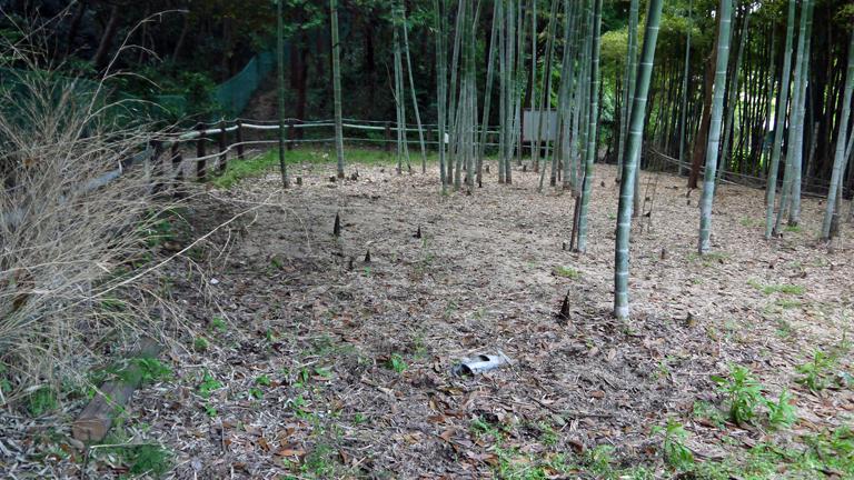 神奈川県所有の竹林に「筍掘らないで」の掲示板4・27_c0014967_18505928.jpg