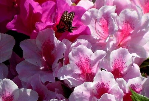路傍の花、樹々の鳥(212) ~ 花と蝶 ~_b0102572_1358345.jpg
