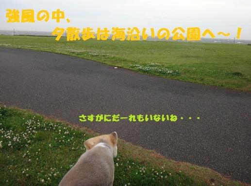f0121712_23301520.jpg