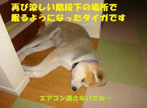 f0121712_23543273.jpg